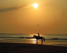 Ośrodki jeździeckie